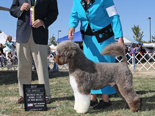 Photo of Grand Champion PWD - Captain