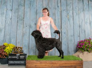 "Acostar's female champion water dog ""Bella"""
