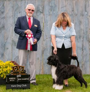 Cali New Champion and Best Canadian Bred in Show