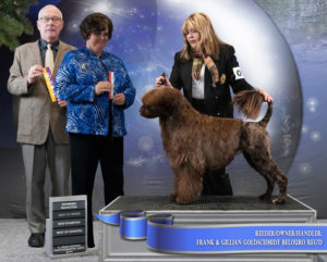 "Photo of GCH BELOURO'S COPPER BAIE FINE, CGN, JWD ""Finn"""