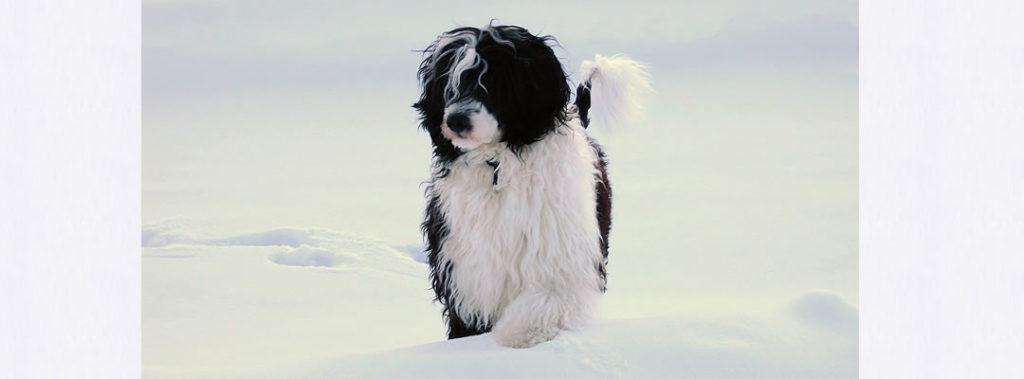 Phoenix in the winter snow