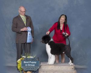 Best Puppy In Group Assiniboine
