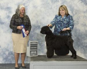 Skyy Best of Breed - Acostar Champion Waterdog