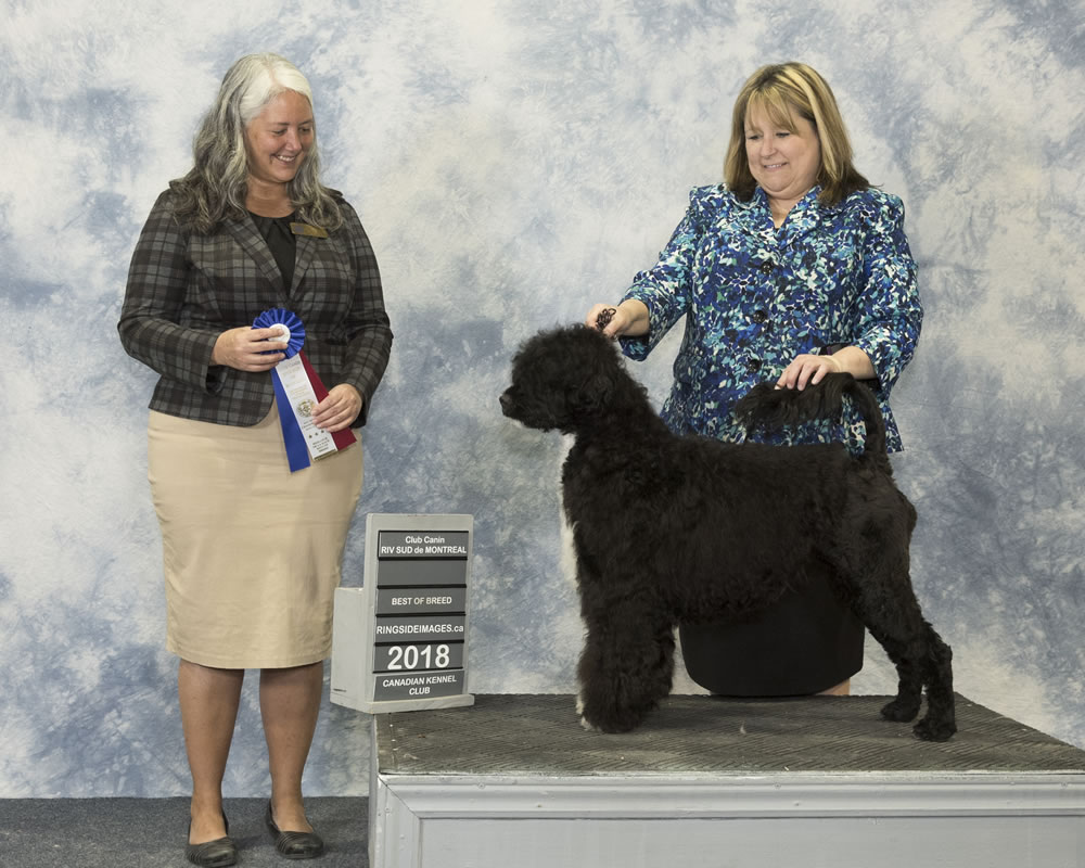Skyy Best of Breed - Acostar Champion Waterdog