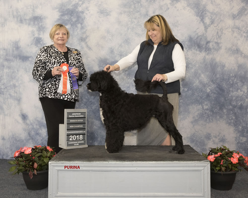 Skyy Winners Bitch New Champion - Acostar waterdogs Ontario