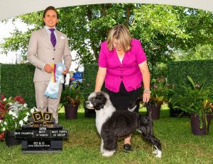 Jilep the Portuguese Water Dog is a new Champion