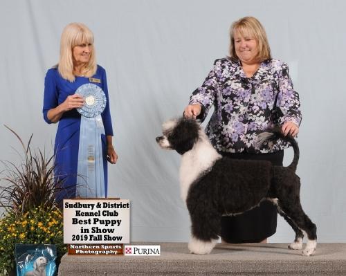 Julep the PWD wins Best Puppy In Show in Sudbury