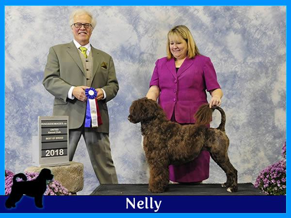 Nelly – Acostar female breeding Portuguese waterdog