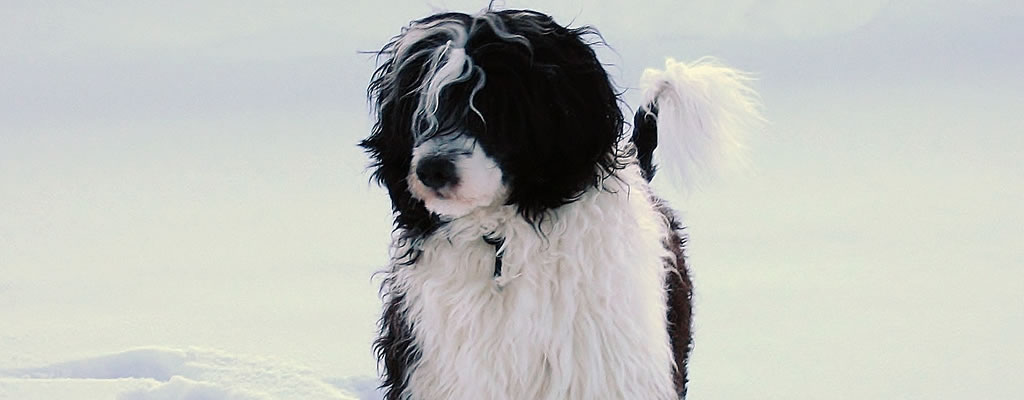 photo of water dog in the snow